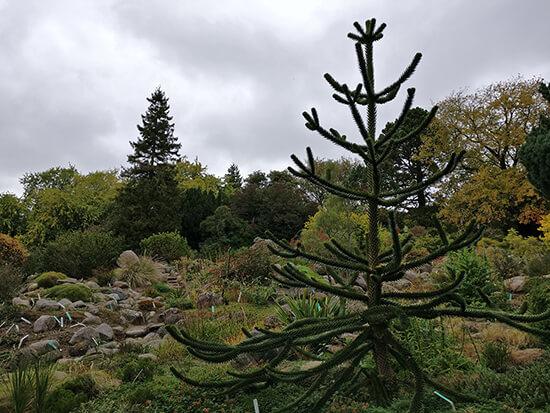 Aarhus Botanical Garden (image: Angela Griffin)