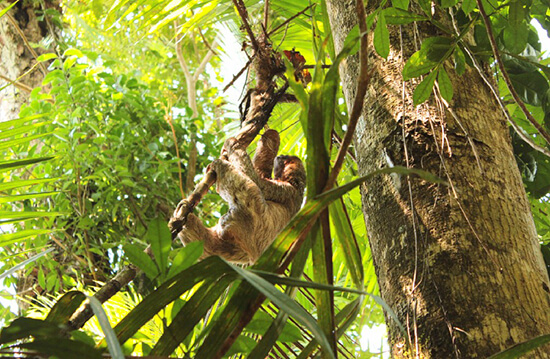 Sloth at Manuel Antonio National Park (image: Claus Gurumeta)