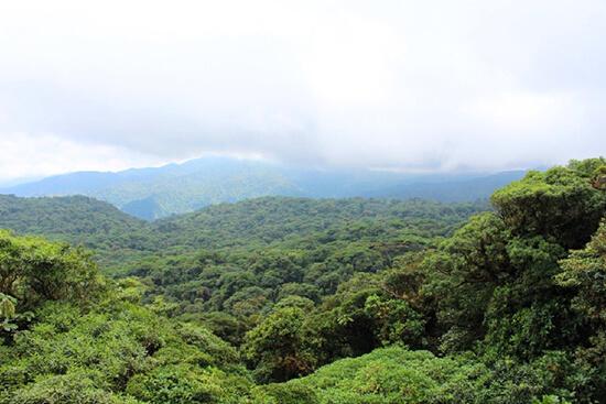 Monte Verde Cloud Forest (image: Claus Gurumeta)