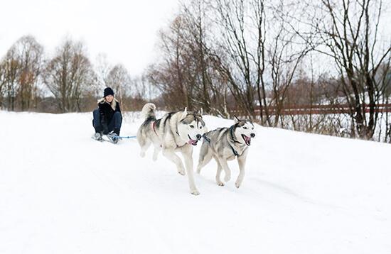 Make sure you try the apres-ski, like husky sledding