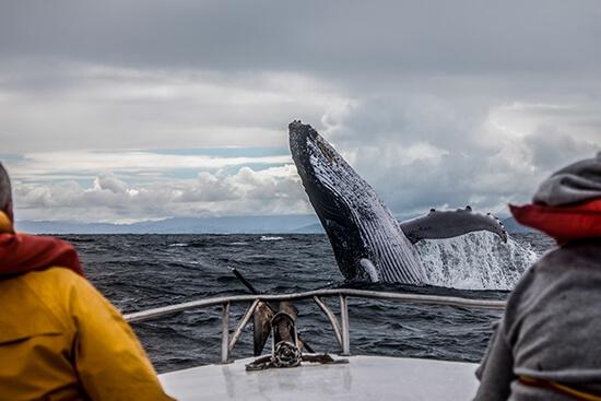 Spot humpbacks