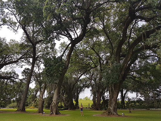 Me, dwarfed by the live oak trees at Houmas House (image: Alexandra Gregg)