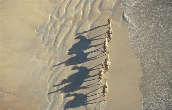RS 7. Camels on Cable Beach, Broome 107947-4