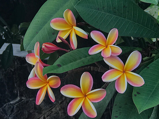 Hawaiian flowers (image: Phil Murray)