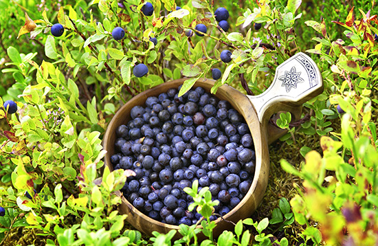 Foraging for berries (image: Visit Finland)