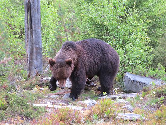Bear watching (image: Hazel Plush)