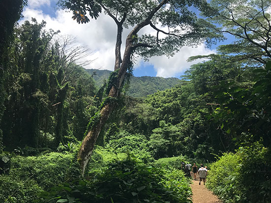 The Manoa Falls Trail (image: Phil Murray)