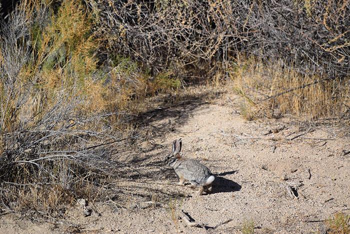Wildlife spotting in Joshua Tree National Park Carlie Mesquitta