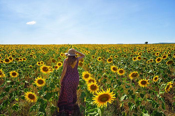 Woman in field of sunflowers, Queensland