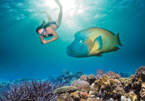 Woman snorkelling in the Great Barrier Reef